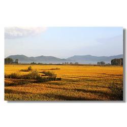 米稻库(查看)、火爆热卖五常大米图片