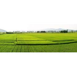 米稻库(图)|2016东北大米|大米图片