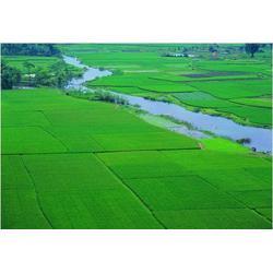大米|米稻库(在线咨询)|新五常稻花香大米图片