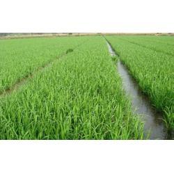 五常大米随处可见认准品牌很重要、米稻库图片