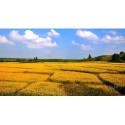 大米,米稻库,国标有机大米图片