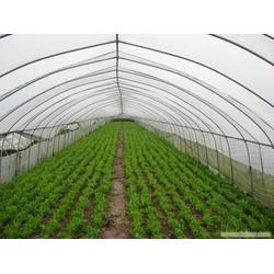 东安蔬菜大棚骨架、╱刘姐╱、蔬菜大棚骨架图片