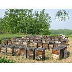 农家土蜂蜜割蜜,湖南农家土蜂蜜,新阳蜂业蜂产品加盟图片