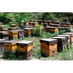 新阳蜂业厂家直销 洋槐蜂蜜功效-远安县洋槐蜂蜜图片