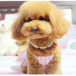 宠物美容_萌宠天下(在线咨询)_宠物美容剪图片