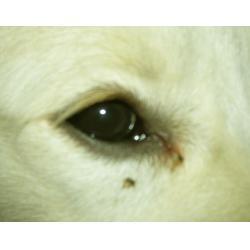 垦利宠物医疗,济南宠物医疗,萌宠天下(多图)图片