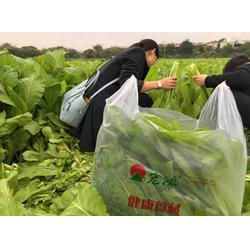 深圳有机蔬菜、有机蔬菜种植技术、宏鸿农产品集团(多图)图片