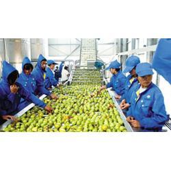 农产品配送|宏鸿农产品集团|农产品配送物流图片