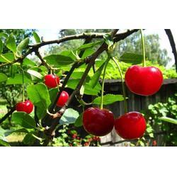 宏鸿农产品集团(在线咨询),水果配送,水果配送广告图片