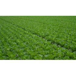 宏鸿农产品集团-配送-农产品生鲜蔬菜配送图片