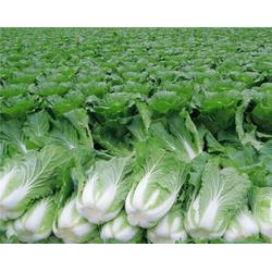 苏州生鲜配送,宏鸿农产品集团,生鲜配送中心设计图片