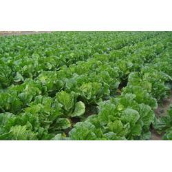 蔬菜瓜果配送、瓜果配送、宏鸿农产品集团(多图)图片