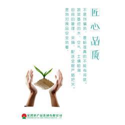 事业合作伙伴-宏鸿农产品集团-宏鸿事业合作伙伴图片