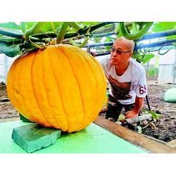 有机蔬菜配送网,蔬菜配送,宏鸿农产品集团图片