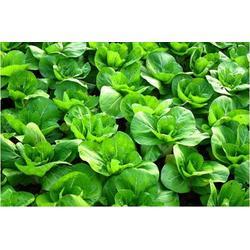 宏鸿农产品集团、有机蔬菜、广州有机蔬菜图片