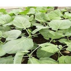 吃好菜找点对点(多图)四季时令有机蔬菜-有机蔬菜图片