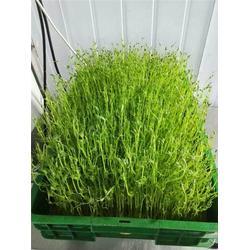 农-中农华丰生物科技长沙分公司加盟宣传消费者-中农华丰产业好图片