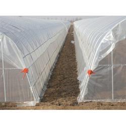 蔬菜大棚钢管、阜阳蔬菜大棚钢管、天津蔬菜大棚钢管(多图)图片