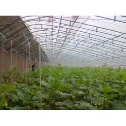 蔬菜大棚配件,天津盛达通源,山东蔬菜大棚配件图片