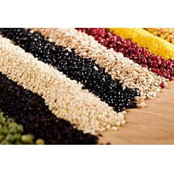 五谷雜糧粉廠家-德州五谷雜糧粉-伊蘇雅生物科技瑪咖(查看)圖片