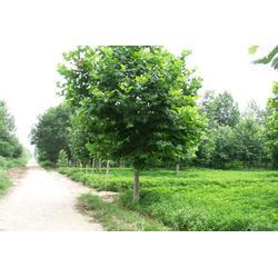 园林绿化,同顺地坪,冠县园林绿化图片