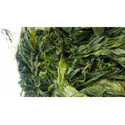 榆林裙带菜-泰安市岱龙进出口(在线咨询)盐渍裙带菜梗芽图片
