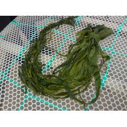 裙带菜三级梗段-泰安市岱龙进出口-萍乡裙带菜图片