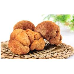 猴头菇销售、巴彦淖尔猴头菇、腾飞食用菌图片