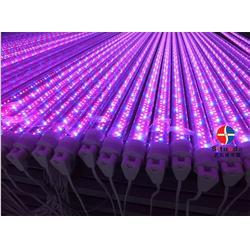 T8灯管供应-T8灯管-东莞思拓达光电科技图片