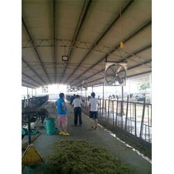润江温控设备(多图)|牛舍风扇厂家|平顶山牛舍风扇图片