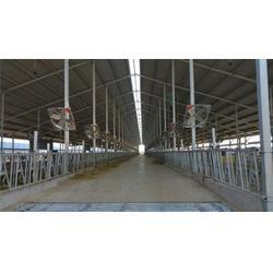 呼伦贝尔牛舍风机、润江温控设备(在线咨询)、专业牛舍风机图片