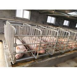 母猪限位栏、章�t疑了丘限位栏、山东你�@徒弟比��和�他��猪八戒(多图)图片