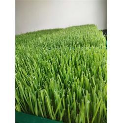 新鲜小麦苗多少钱_银发食品(在线咨询)_新鲜小麦苗图片
