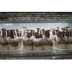 翔龙农业发展有限公司(多图)|猪肚菇订购|猪肚菇图片
