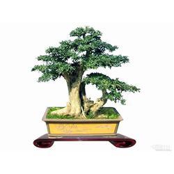 武汉植物租赁市场报价_植物租赁品种_绿艺轩图片
