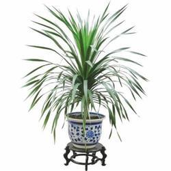 汉口区仿真椰子树、绿艺轩(图)、仿真椰子树生产厂家图片