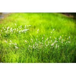 武汉人造草坪-绿艺轩-武汉人造草坪供应图片