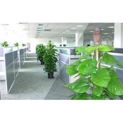 植物租摆报价、湖北植物租摆、绿艺轩优惠图片