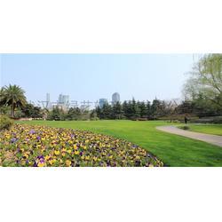 绿化草坪种类,洪山区绿化草坪,绿艺轩(查看)图片