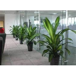 绿植出租公司,绿艺轩,江夏区绿植出租图片