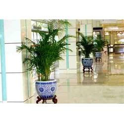 绿植租摆服务标准、汉中市绿植租摆、绿艺轩图片