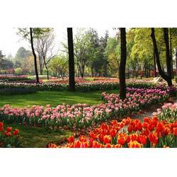 花卉租赁公司,辽宁省花卉租赁,绿艺轩(查看)图片