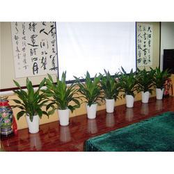 仿真植物租摆、绿艺轩绿植租赁、植物租摆图片