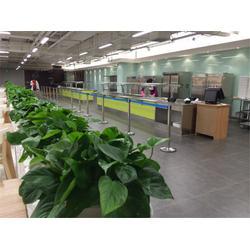 武汉绿植租赁租摆|武汉绿植租赁|绿艺轩(查看)图片