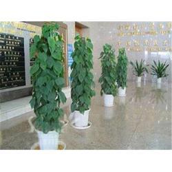 武汉绿植租赁公司、武汉绿植租赁、绿艺轩图片