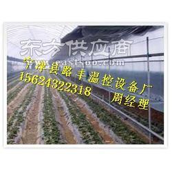 宁津路丰蔬菜大棚取暖锅炉图片