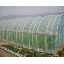 棚膜|馨隆温室|大棚棚膜厂图片