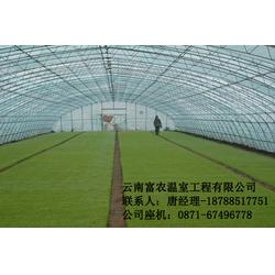 玻璃温室大棚施工-玻璃温室大棚-云南富农棚业(查看)图片