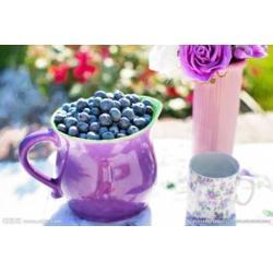 好眼力蓝莓叶黄素的作用_好眼力视光科技(在线咨询)图片
