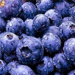 蓝莓叶黄素的效果不错_叶黄素_好眼力视光科技图片